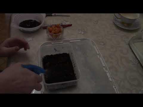Вопрос: Можно ли выращивать морошку в Помосковье?