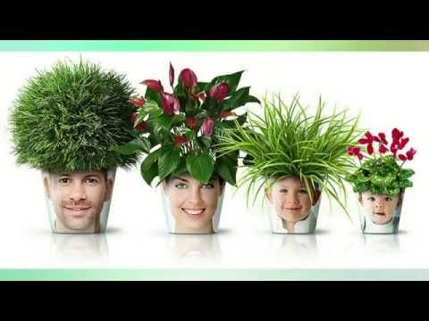 Орхидеистам для вдохновения  флористические идеи для воплощения