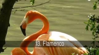 Aves nacionales de Latinoamérica