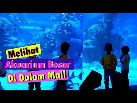 Pergi ke Mall Neo Soho sambil melihat ikan di Jakarta Aquarium