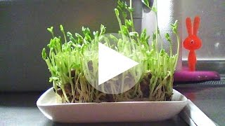 【ケニス】インターバルカメラ レコロを使用し、植物の成長を記録。 撮...