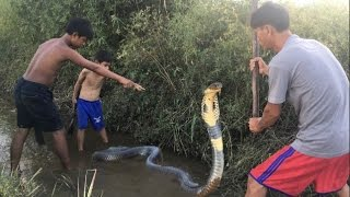 wow amazing children catch water snake using bamboo net trap how to catch water snake in cambodia