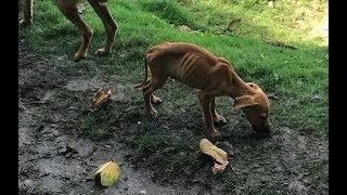 【感動】旅行先でガリガリの犬に出会った少女。 何とか助けたいと決意し... thumbnail