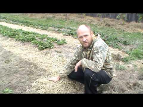 Природное земледелие  Плодородная земля за три года из глины! Верхозин Юрий