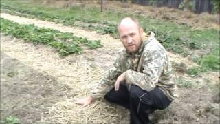 видео Газон на глине
