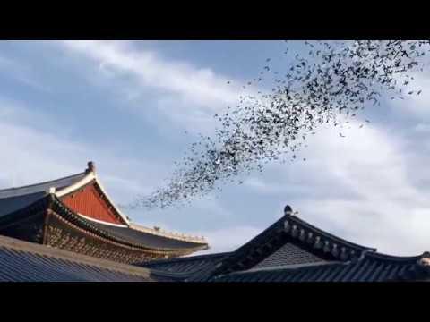 Esencia De Corea Del Sur Y Busan
