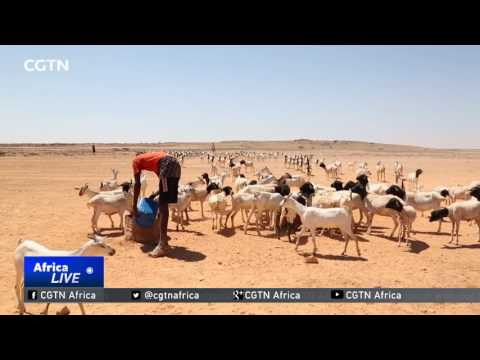 China donates $10 million dollars to WFP for Somalia aid