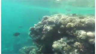 Египет Самый красивый риф в Шарме Пляж отеля Siva Sharm подводный мир кораллы рыбки