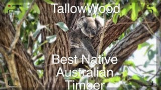 The Tallowwood Tree - Eucalyptus microcorys - Best Native Timber in NSW
