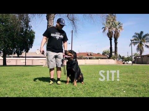 Basic Dog Obedience Training Los Angeles Orange County | Sandlotk9