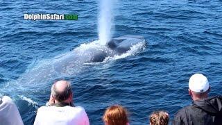 the Blu Whale Encounter  3D 360 VR