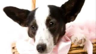 Jack Russel Terrier Potty Training Tips