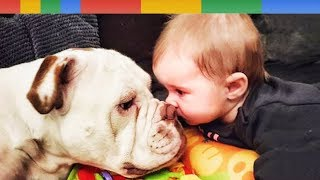 NEW BEST Funniest Baby and Dog Playing Together - Funny Baby and Pet