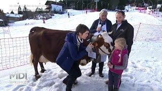 ANIMAUX : L'Abondance, une vache laitière d'altitude