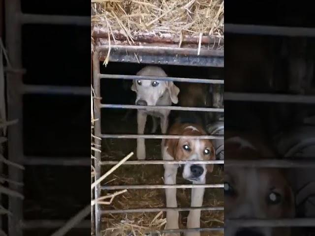 Maltraitance animale : des chiens enfermés dans des épaves à Reugny (37) l'enquête