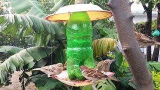 Birds At Homemade Feeder | Winter Bird Feeder