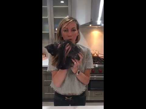 ARROW  Katie Cassidy Cooking with Katherine  LIVE