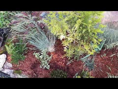 Ревень! 3 способа как использовать ревень в саду!