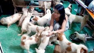 Người phụ nữ độc thân ở Sài Gòn nuôi 90 con chó - Tin tức trong ngày