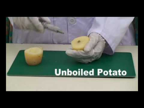 experiment turgor in potato tissue