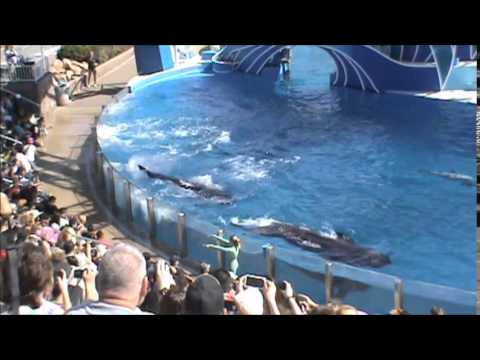 California Travel Destinations   SeaWorld San Diego Dolphin Show  Tour