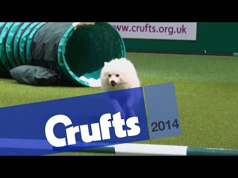 Agility | Crufts Team | Small Final | Crufts 2014