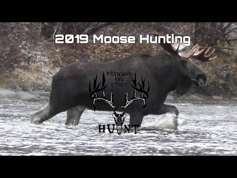 2019 Moose Hunt With Dad