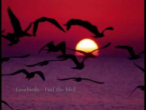 Lovebirds feat. Marie Tweek - Feel the bird