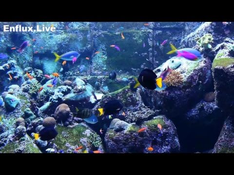 lofi hip hop radio aquarium 24/7 - beats to work/study/chill