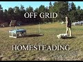 Homestead Chickens ~ Off Grid Wood Shop ~ Day On The Homestead