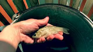 Охота на РЫБКУ!! Карась!Рыба на Даче!!видео для детей.Рыбалка.