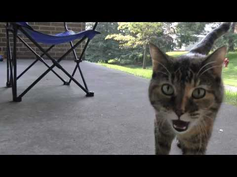 Sweet talking cat meows and cries