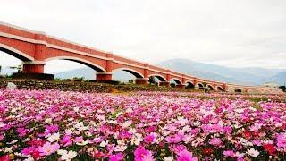 水走橋往上流2018 .02 台東鹿野二層坪水橋.花海.拱型水橋景觀! Water walking arch bridge landscape!