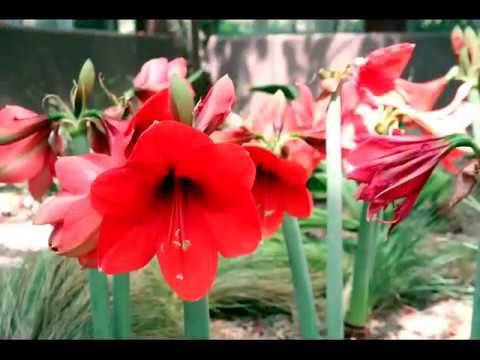 Callaway Gardens 2011 YouTube