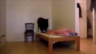 Животные одни дома