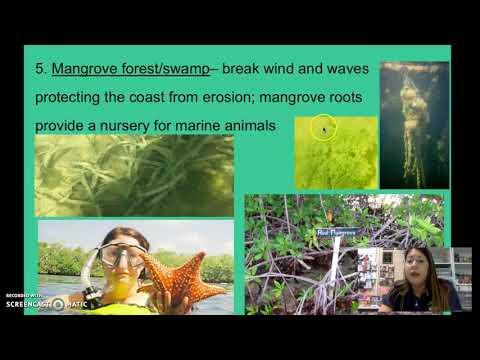5.3 And 5.4 - Intertidal, Neritic, And Open Ocean Zones