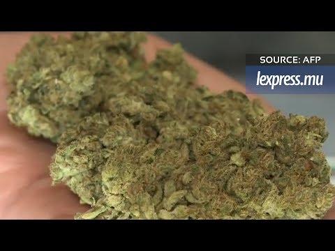 Californie: avec la légalisation du cannabis, ruée vers l'or vert