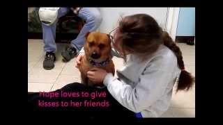 Hope @ Beacon Animal Rescue