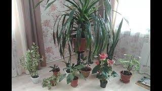 Мои домашние растения.
