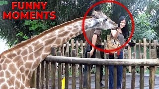 FUNNY ANIMALS 😻🐶😁 FUNNY  MOMENTS 🤣😂 Try Not To Laugh Challenge 😍 - 55