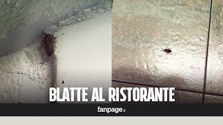 La cucina è invasa dalle blatte: chiuso ristorante degli orrori