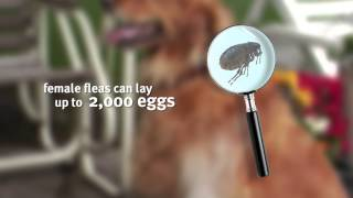 Banfield Pet Hospital - Parasites and Your Pets
