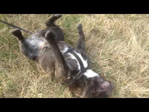 Dog vines video