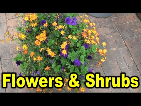 Names of different flowers and shrubs