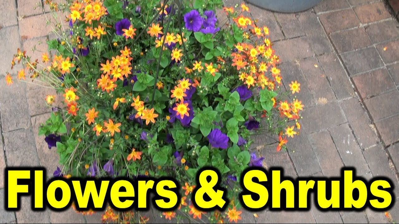 Names of different flowers and shrubs youtube sciox Images
