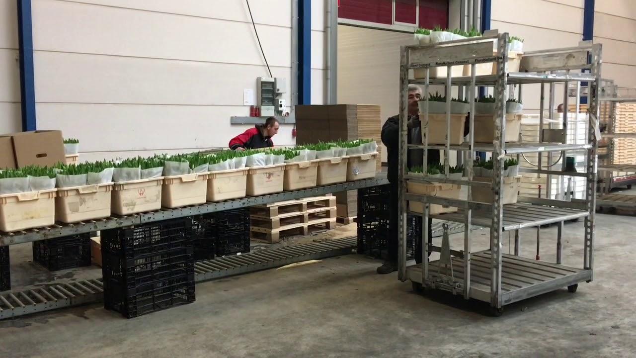Продажа цветов недорого в челябинске. Акция 25 роз за 749 руб. С круглосуточной доставкой цветов, розы дешево, цветы челябинск, заказать цветы.