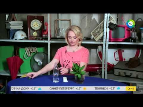 Как оставить цветы в квартире, чтобы они не засохли