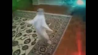Танцующие коты