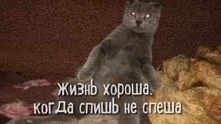 Забавные животные вокруг нас..  или кошачий мир)