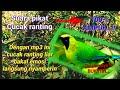 Suara Pikat Cucak Ranting Cucak Ranting Sumatra  Mp3 - Mp4 Download